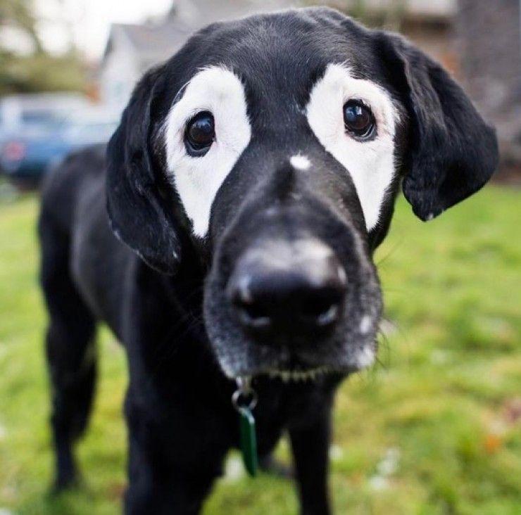 Img perros blancos vit uligo ojos