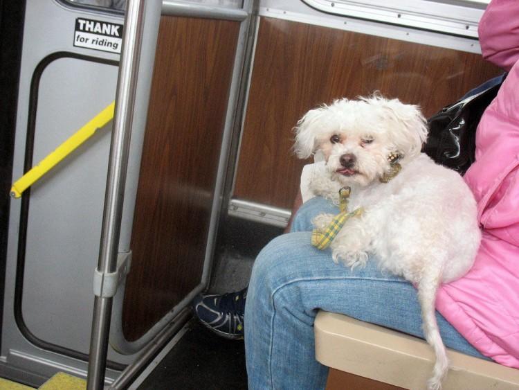 Img perros bus viajar art