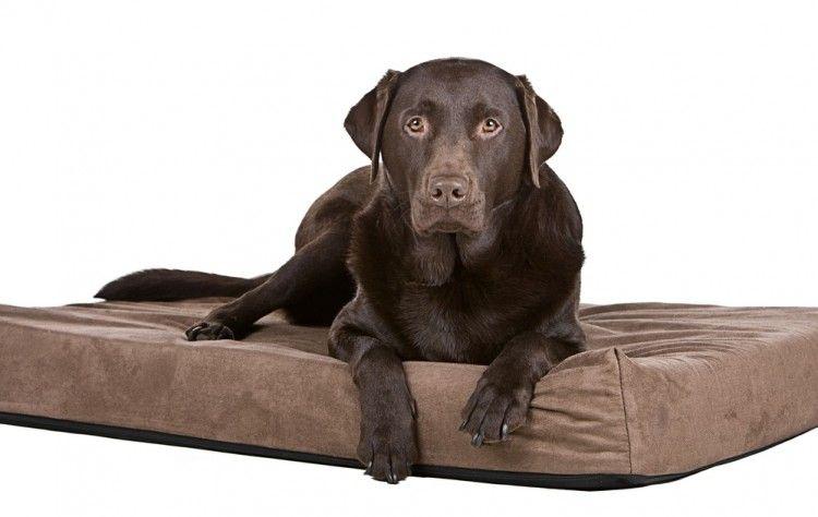 Img perros camas caseras art