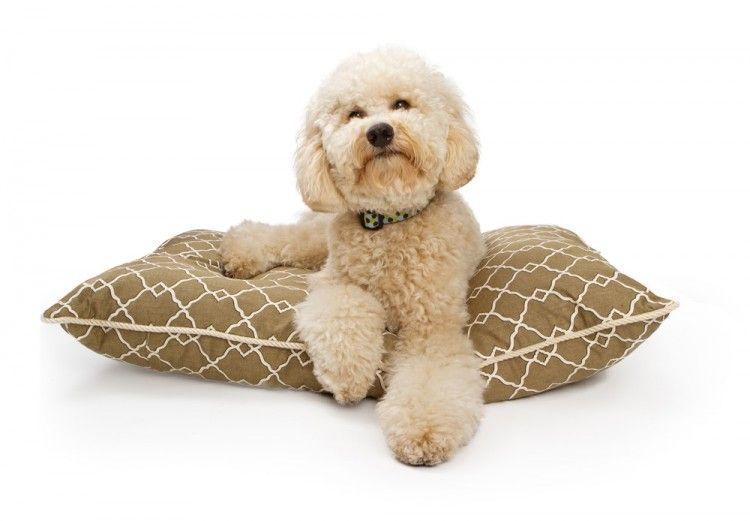 Img perros camas hechas casa art
