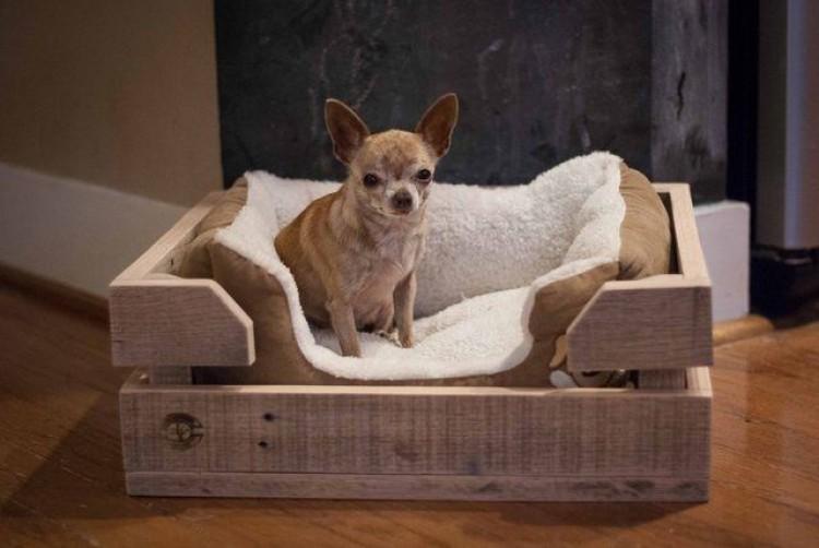 Img perros camas navidad art