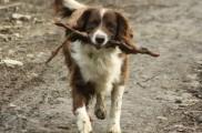 Img perros campo rurales desparasitar enfermedades salud cuidados listado