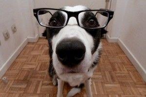 Img perros cancer detectar gafas enfermedades salud art