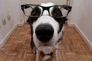 Img perros cancer detectar gafas enfermedades salud listado