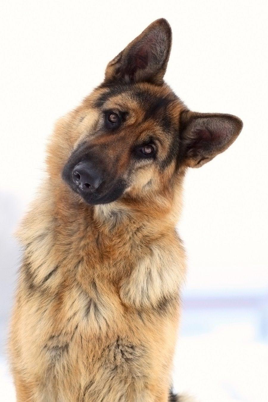 perros y cáncer de próstata