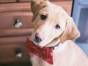 Img perros cara culpa animales mascotas mentiras art