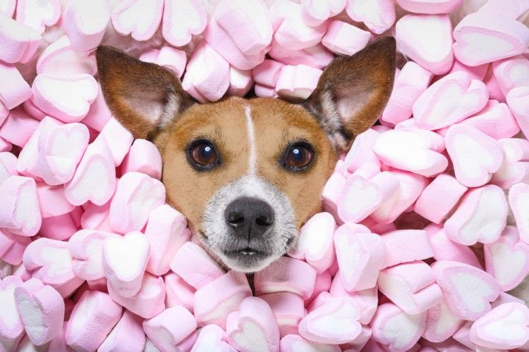 Img perros caramelos chicles peligros xitilol art
