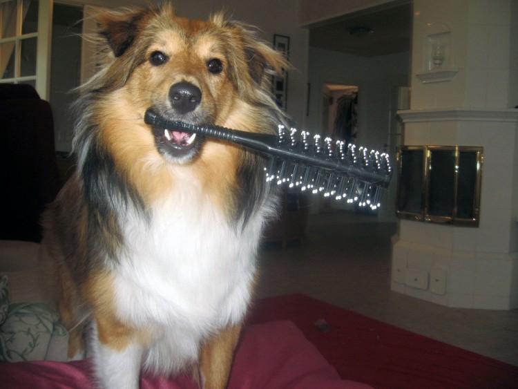 Img perros cepillar art