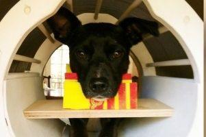 Img perros cerebro escaner mente pensar ciencia psicologia animales art