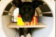 Img perros cerebro escaner mente pensar ciencia psicologia animales listado