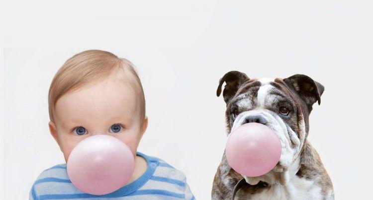 Img perros chicles sin azucar peligros caramelos art