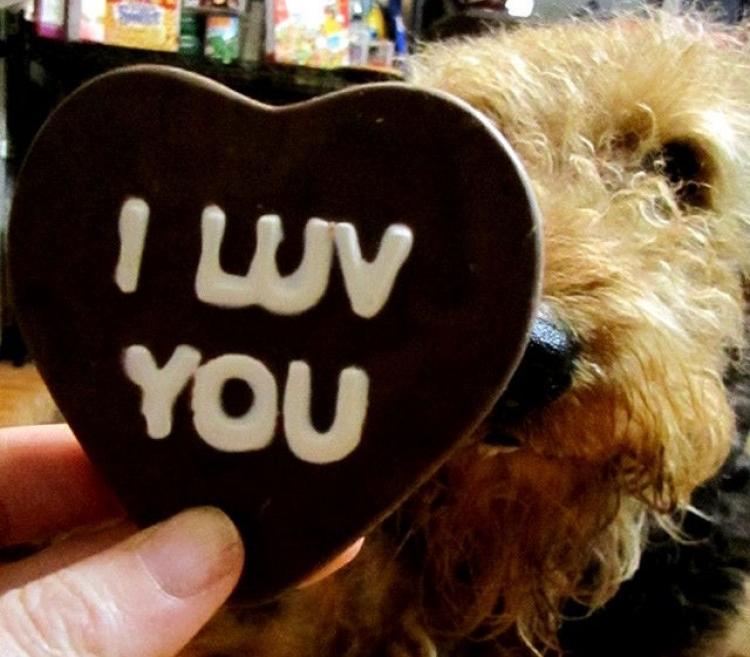 Img perros chocolate toxico