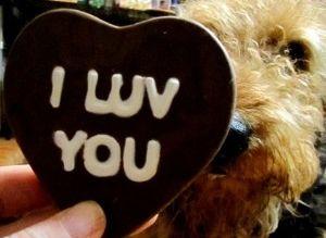 Img perros chocolates peligrosos alimentos venenos animales mascotas cacaos art