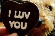img_perros chocolates peligrosos alimentos venenos animales mascotas cacaos listado