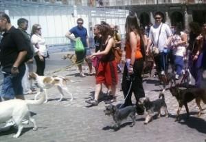 Img perros ciudad concentracion2 art