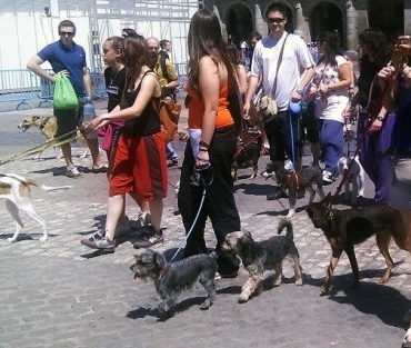 Img perros ciudad defensa animales art