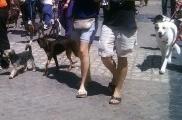 Img perros ciudad defensa animales listado