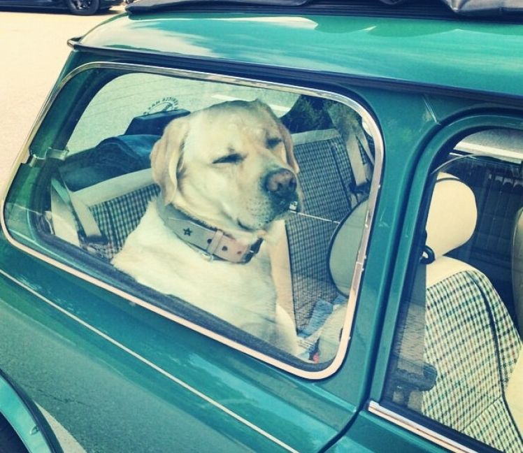 Img perros coches viajes art