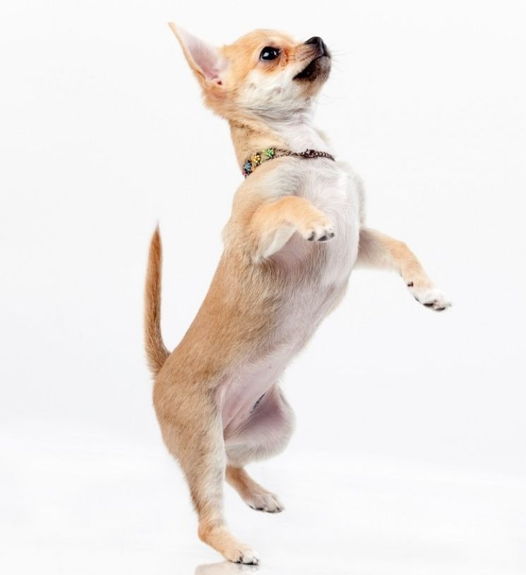 Img perros cola amputar prohibido art