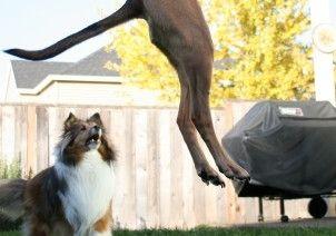 Img perros cola saltos jugar comunicacion rabo jugar hablar psicologia animales art