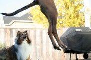 img_perros cola saltos jugar comunicacion rabo jugar hablar psicologia animales listado
