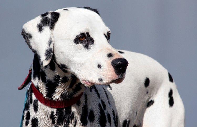 Img perros collares gps salud art