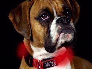 Img perros collares luces accesorios mascotas led animales art