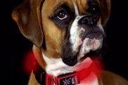 img_perros collares luces accesorios mascotas led animales listado