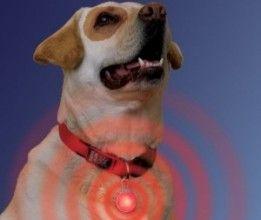 Img perros collares luz luces colgantes mascotas art