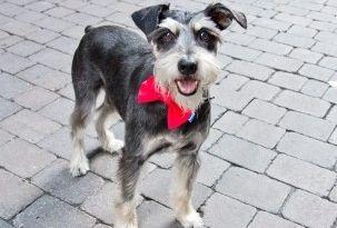 Img perros collares pajaritas accesorios bandanas mascotas animales caseros decorar srperro colega art