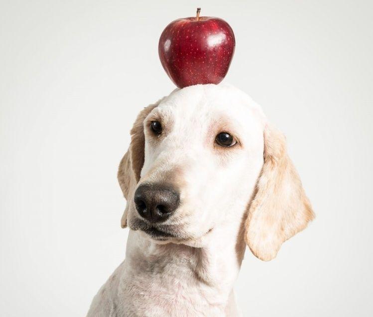 Img perros comen frutas art