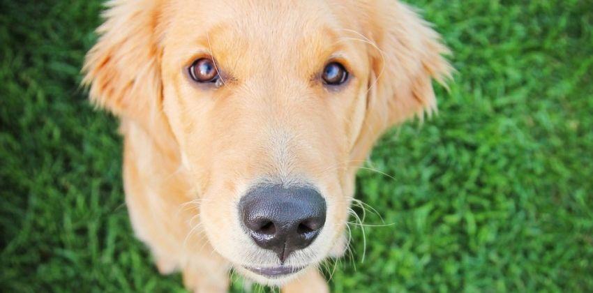Img perros comen hierba vomitan portada