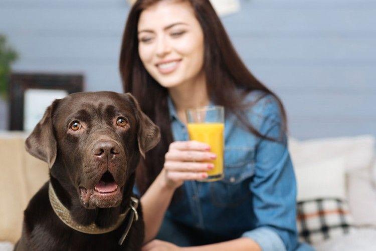 Img perros comer naranjas peligros4 art