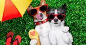Img perros comida verano helados