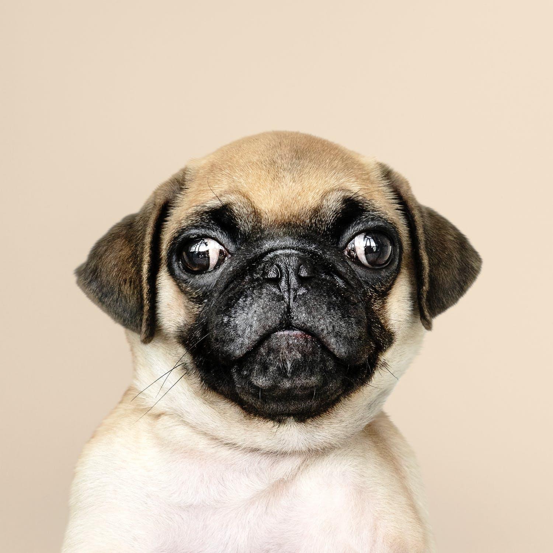 La meva mascota és normal? Accions rares per a tu, però perrunamente naturals