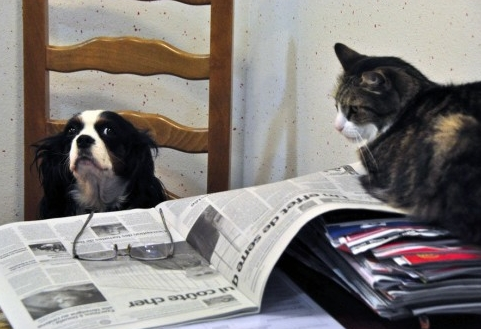 Img perros con gatos art