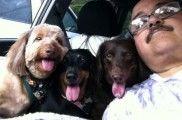 Img perros convivir razas preferidas listas listado