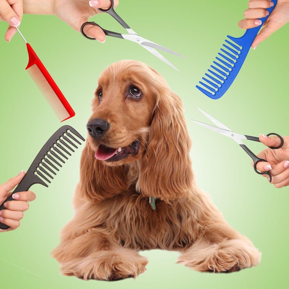 Img perros cuidados pelo