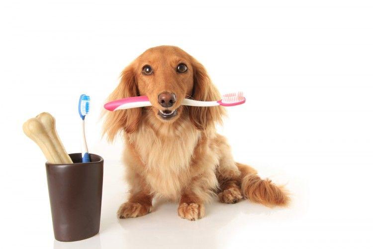Img perros dent ufricos peligros xitilol