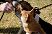 Img perros diabetes diabeticos alimentacion comida animales mascotas listado