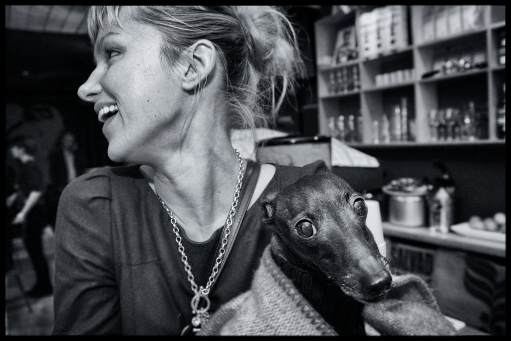 Img perros diabetes enfermedades curan tratamientos alimentos animales mascotas