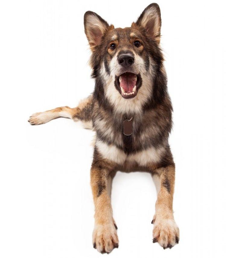 Img perros dicen ladridos 2 art