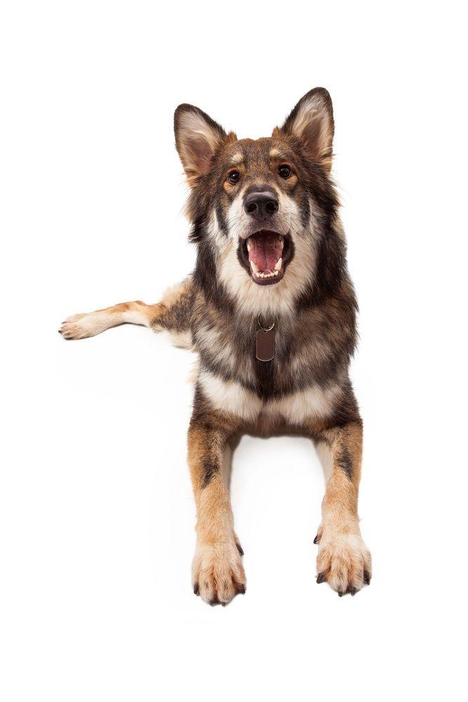Img perros dicen ladridos