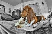Img perros dietas barfs huesos alimentacion carnes crudas listado