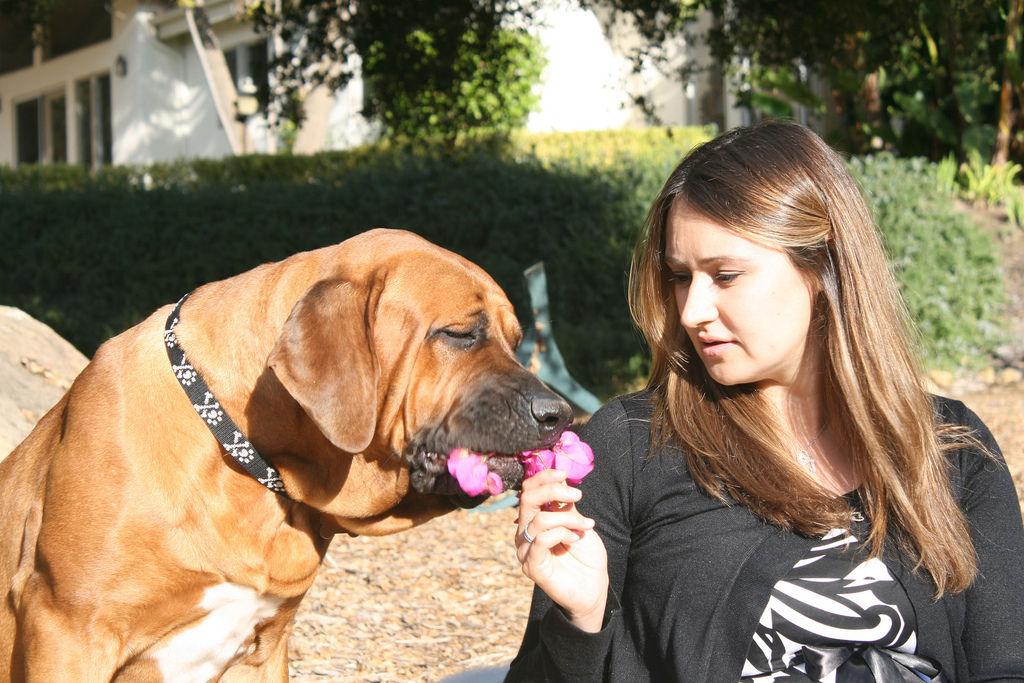 img_perros educar errores frecuentes consejos educacion canes karen pryor animales mascotas