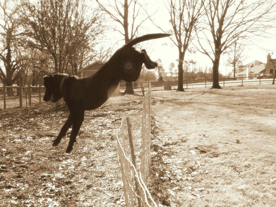 Img perros educar escapan