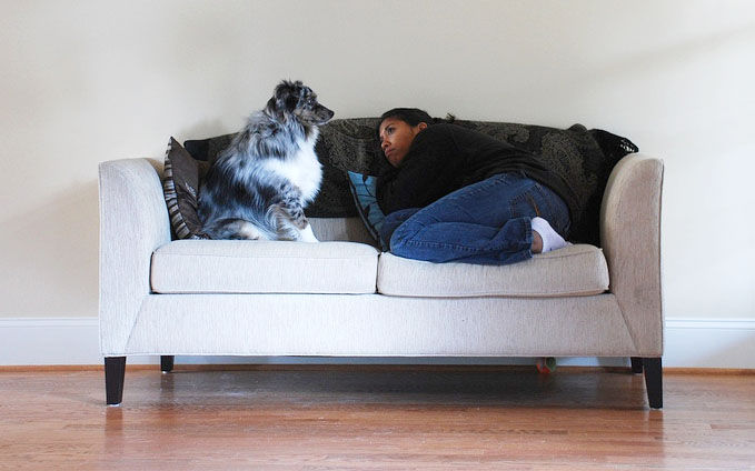 img_perros enamorados