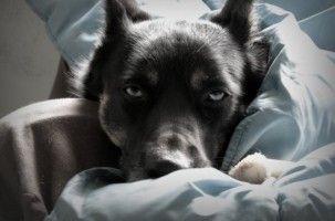 Img perros enfermos cocina casera cocinar alimentos recetas animales mascotas art