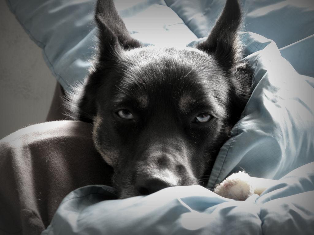 Img perros enfermos cocina casera cocinar alimentos recetas animales mascotas