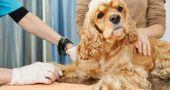 Img perros epilepsia ataques